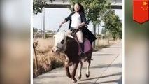 乗馬が趣味の女性 馬より牛が安い!を理由に乗牛を始める - トモニュース