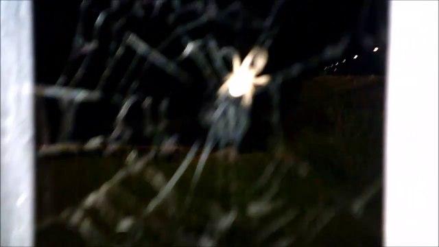 MCH 132 SPIDERS.CREEPY CRAWLING WEB SLINGING SPIDER.