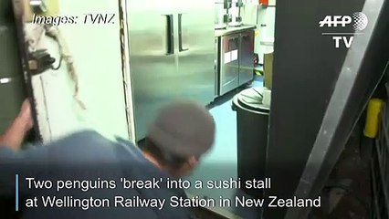 Penguins just want to have fun…and sushi