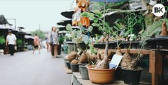 JJ Plant and Flower Market is an oasis for green thumbs in the heart of Bangkok