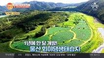 울산 '회야댐 생태습지' 1년에 한 달만 개방! 오늘부터 운영 시작