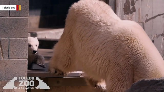 This Polar Bear Cub Is The Cutest Thing You'll See Today