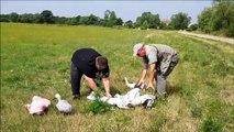 Lâcher de cigogneaux à Lelling, près de Saint-Avold
