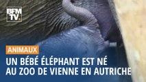 Un bébé éléphant est né au zoo de Vienne en Autriche
