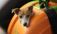 صندوق للدراجات الهوائية والنارية مخصص للحيوانات الأليفة