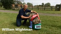 Physic Sunderland Pig's Colombia prediction