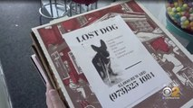 Pizzeria puts missing pet flyers on pizza boxes