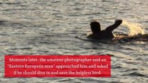 A Mystery Man Stripped Down to His Pants and Swam Out to Save a Stranded Seagull
