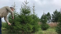 Chris Day: why Princess Anne loves his Whalley business, The British Christmas Tree Company