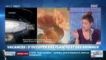 La chronique de Nina Godart : Quand la tech prend soin de nos plantes et nos animaux pendant les vacances - 19/07