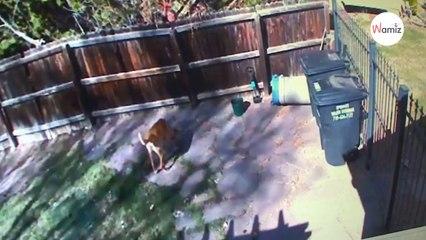 La caméra filme une femme en train de jeter quelque chose dans un jardin : la vérité est glaçante