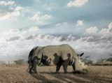 The Last Male on Earth: Trailer HD VO st FR/NL