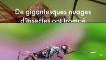 De gigantesques nuages d'insectes ont trompé des satellites météo et altéré leurs prévisions