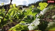 LES TUTOS VINS - Déguster un vin : quelles sont les étapes à respecter ?