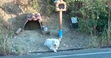 Un chien refuse de s'éloigner de l'endroit où son maître est mort 18 mois plus tôt