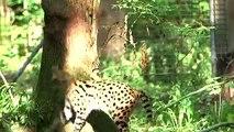 « CAPITAL » du dimanche 21 juillet à 21:05 sur M6 intitulée « Plus naturels et plus spectaculaires : les nouveaux zoos star de l'été »