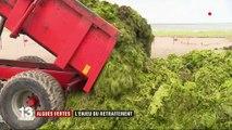 Bretagne : une unique usine pour se débarrasser des algues vertes