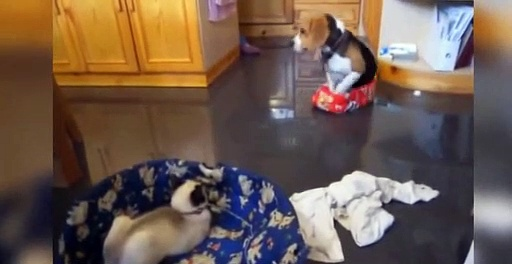 Dogs and Cats sleeping together in one Bed | Animal Funny Compilation 2019