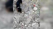 Sevimli köpek korksa da merakına yenik düşüp yılanla böyle oynadı