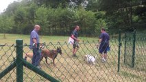Parc Canin à Aywaille