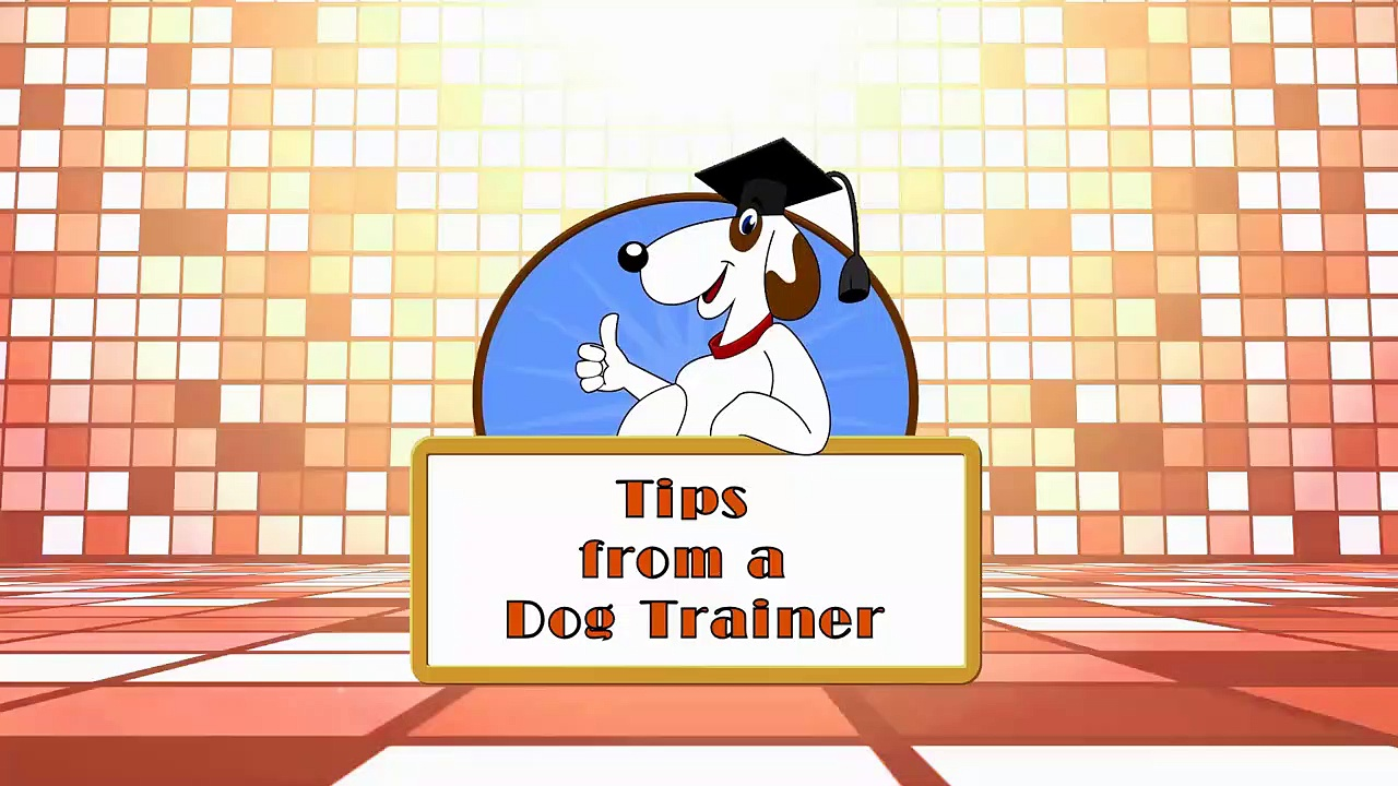Shaping in Dog Training- What is Shaping Part 1
