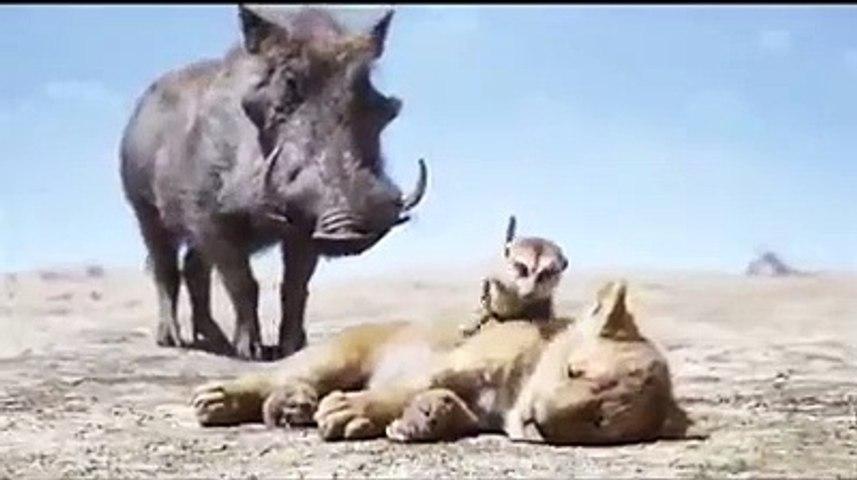 El Rey Leon - Timon y pumba encuentran a simbad  doblaje latino 1994