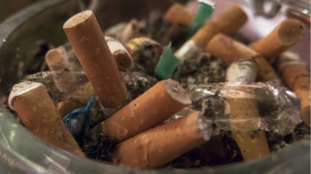 The Bad Thing Littered Cigarette Butts Do To Plants