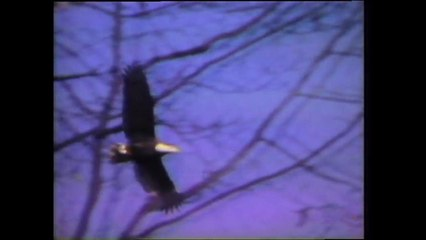 From 1979: Oil refinery vs. bald eagle