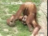 REALLY THIRSTY MONKEY NEEDS A DRINK EXTREMELY FUNNY