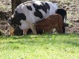 Les animaux en farandole: saison 6: épisode 7