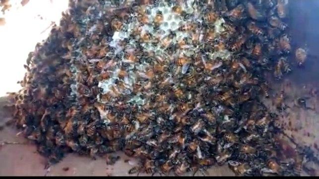 Kazayla kırdığı su borusunun içinden arılar çıktı