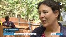 Découverte : des bains de forêt pour revivifier le corps et l'esprit