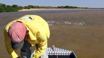 Pêche miraculeuse : il jette son filet dans un banc de poisson immense