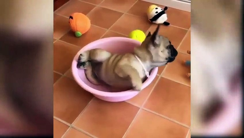 Funny Puppies And Cute Puppy Videos - Cute Puppies Playing With Big Dogs - Puppies TV