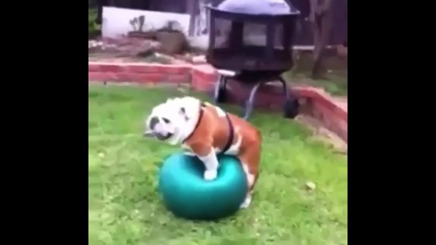 Funny Dog Videos Compilation Try Not To Laugh - Cute Dogs Doing Funny Things 2019 - Puppies TV