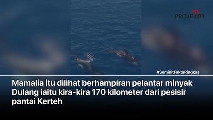 ORCA DI PERAIRAN TERENGGANU