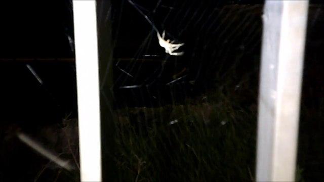 MCH 136 SPIDERS.DICKSON DAM ALBERTA CANADA LATE ONE NIGHT.