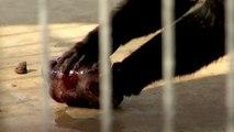 Un zoo aide ses animaux à lutter contre la canicule