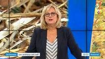 Découvrez les conséquences de la canicule sur les animaux, notamment sur les poules - VIDEO