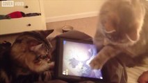 Games are not only for humans!