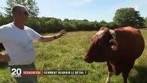 Sécheresse : comment les agriculteurs vont-ils nourrir leur bétail ?