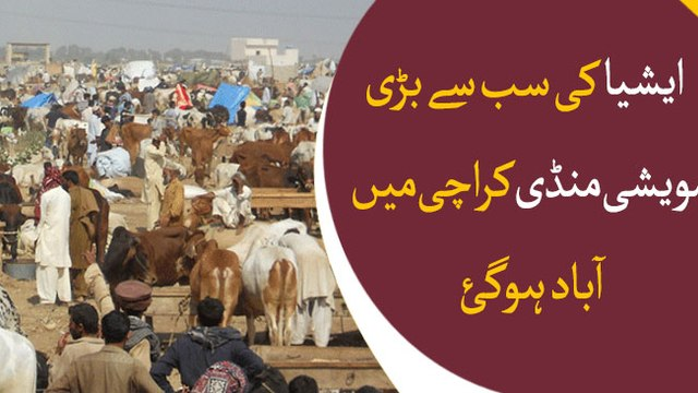 Asia's largest cattle market settled in Karachi