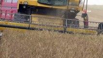 Sivas'ta başlayan buğday hasadı havadan görüntülendi