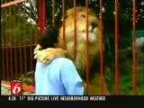 Calin de fou, calin de lion