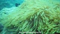 plongee corail a pattaya avec le centre de plongee Thailand Diving Club Pattaya