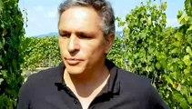DNA - Frédéric Schwaerzler, conseiller viticole à la chambre d'agriculture d'Alsace, fait le point sur l'état d'avancement des vignes en Alsace