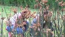 Environnement : Découverte des Prairies du Roy à Loches, un espace naturel sensible