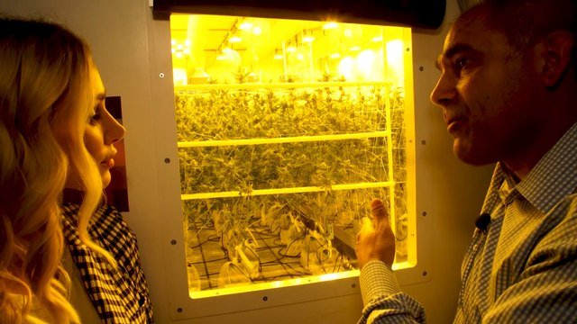 Weed Industry Goes Green at High-End Cannabis Cultivator Canndescent