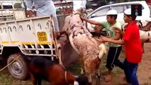 A Goat Sold at 1.5 Lakhs For Bakra Eid In Chandigarh