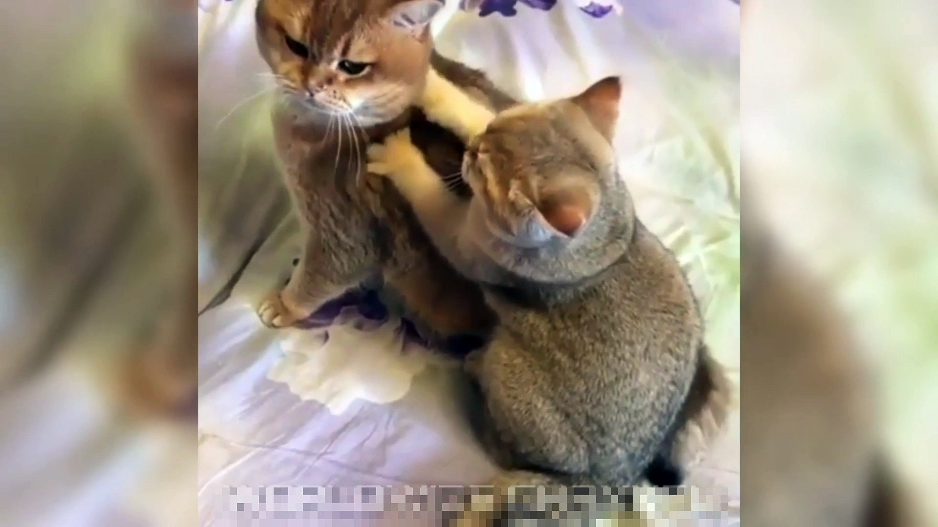 Funny Cat Video Moments Will Make You Smile 12 Video Dailymotion